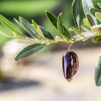Buying the Best Olive Oil